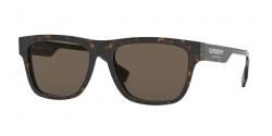 Burberry B 4293  3002/3  DARK HAVANA brown
