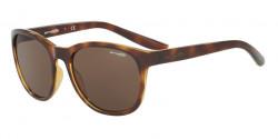 Arnette AN 4228 GROWER 208773  HAVANA brown